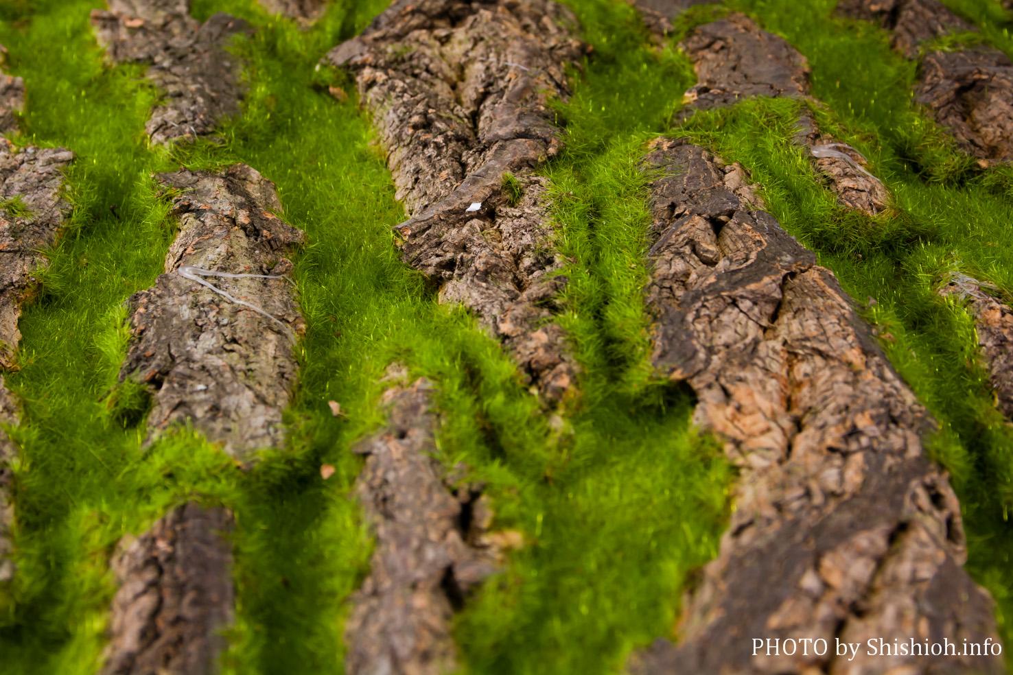もふもふ 手軽にジオラマ 森林 ジオラマ シートB